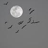 Bird Moon