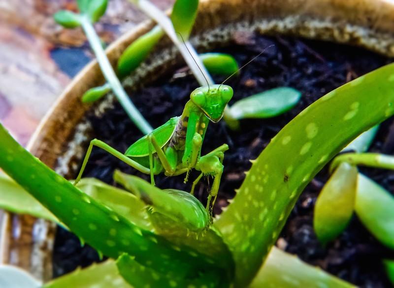 Praying for Aloe