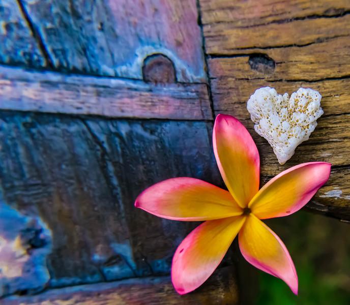 Laura's Coral Heart Plumeria