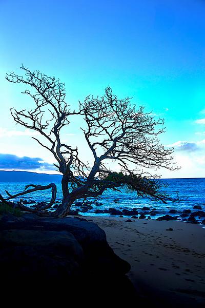 Intense Cool Blue Tree
