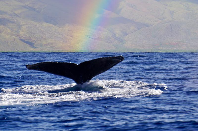 Rainbow Whale
