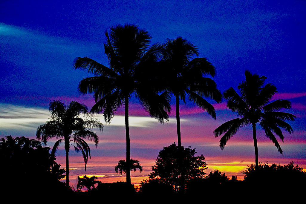Tropical Sunset on Christmas