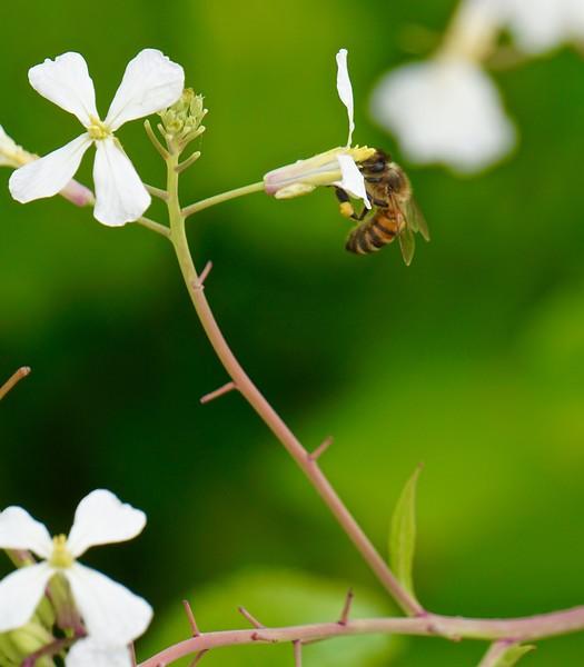 Nectar and Pollen