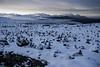 PERU - Puno - 07/04/2015 - Paisaje nevado de las montañas alrededor del cañón del Colca / Winter landscape of mountain in the Colca canion area / Schneelandschaft der Berge um die Colca-Schlucht © Bruno Bertagna/LATINPHOTO.org