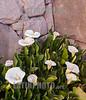 Argentina : Las Terrazas , Suites en Tilcara , Quebrada de Humahuaca , Jujuy - Flores / Argentinien : Las Terrazas - Blumen © Marcelo Somma/LATINPHOTO.org