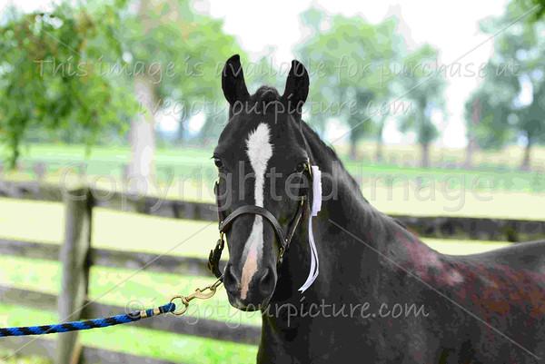 Rider #10 - Bluegrass Blazing Glory (Lucy Knowles)