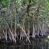 2015 Everglades-0072.jpg