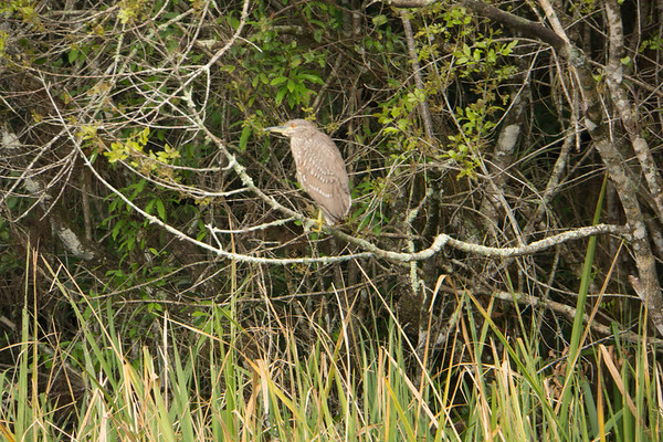 2015 Everglades-0052.jpg