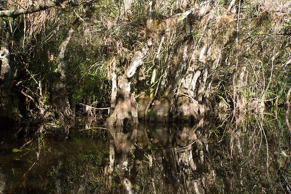2015 Everglades-0086.jpg