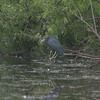 2015 Everglades-0045.jpg