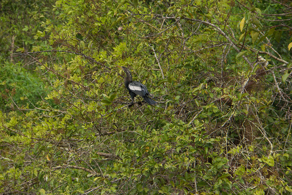2015 Everglades-0053.jpg