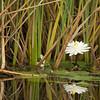 2015 Everglades-0050.jpg