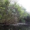 2015 Everglades-0048.jpg