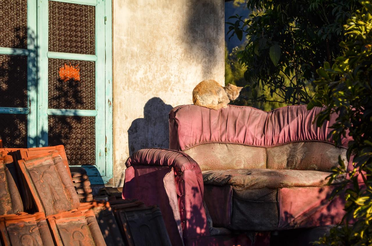 Cat at dawn, Cemoro Lawang, Java