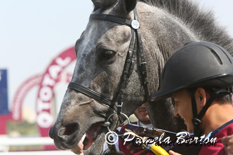 Stallion-1162