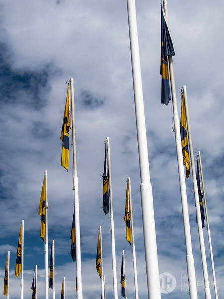 Flags of Pumas