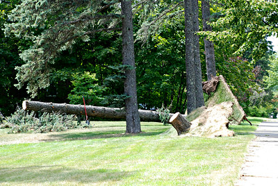 2016 07 31: Storm damage, Trees, July 21, 2016 thunderstorm