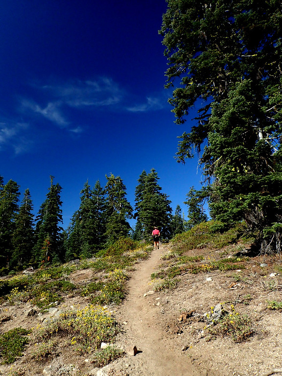 Mount Ashland Meadows Oregon