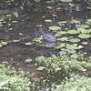 _DSC1550--FS Monitor Lizard