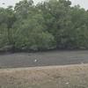 _DSC1549--FS Stork from zoo
