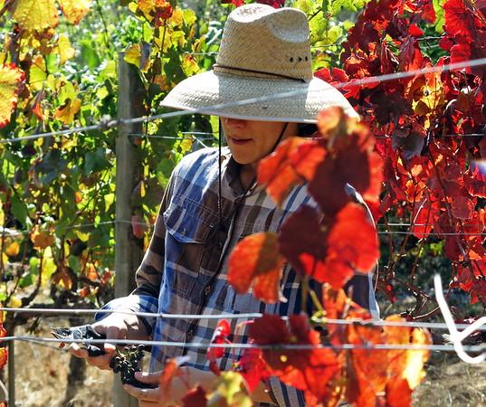 2016-09-5 harvest