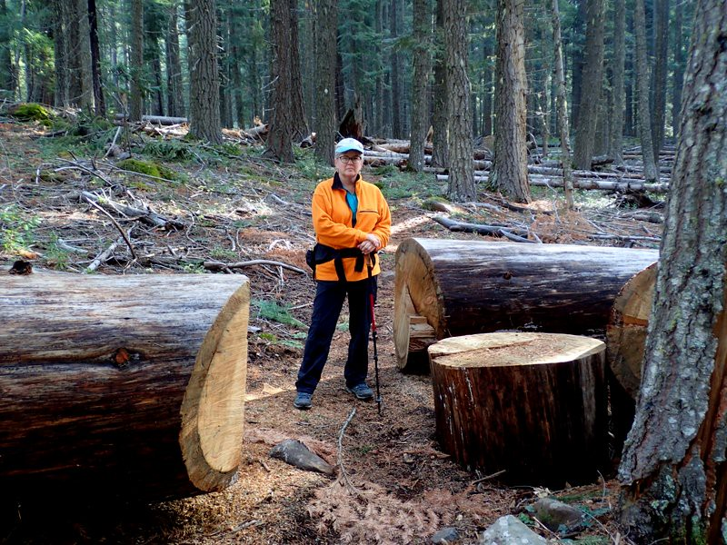 Cut logs on the PCT on the Dead Indian Plateau, Southern Oregon