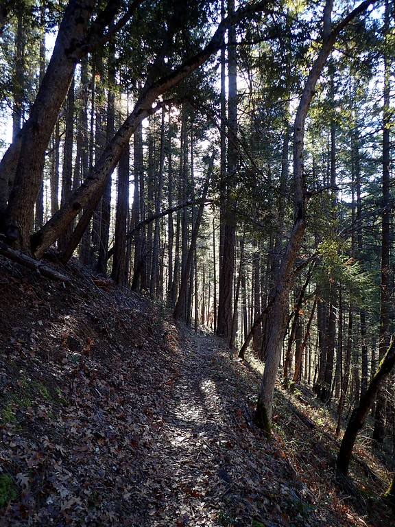 Collings Mountain Trail Applegate Valley Oregon