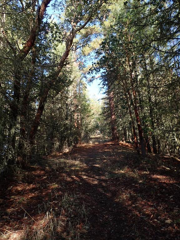 Enchanted Forest Trail Applegate Oregon