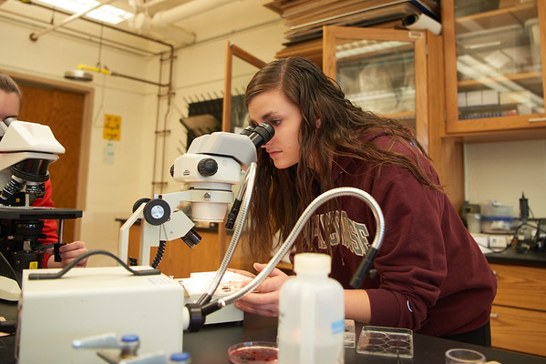 2016_UWL_Biology_Parasitology_Lab_Cowley_098