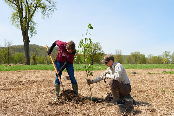 2017_UWL_Biology_Tree_Restoration_Meredith_Thomsen_Flood_Plain_0093
