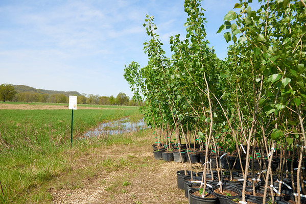 2017_UWL_Biology_Tree_Restoration_Meredith_Thomsen_Flood_Plain_0002