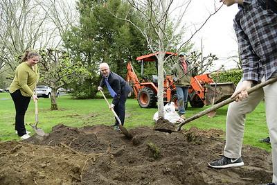 Tree Planting 2017