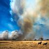 Bush Fire Causes Safari Camp Evacuation