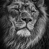 Proud king