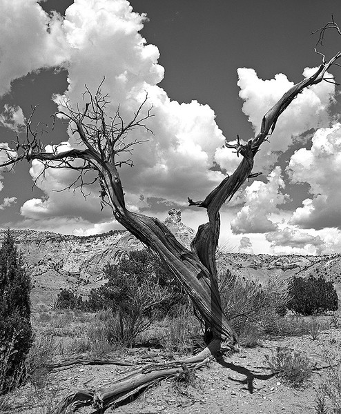Georgia O'Keefe's Ghost Ranch