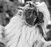 Exotic Monkey