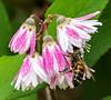 The Honeybee's Lunch