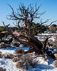 Old Tree-Canyonlands National Park Utah