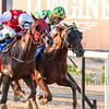 Horse Racing at Sharjahi, UAE