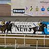 Horse Racing, Meydan, Dubai, UAE