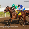 Horse Racing at Jebel Ali, Dubai, UAE