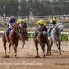 Horse Racing,Sharjah, United Arab Emirates