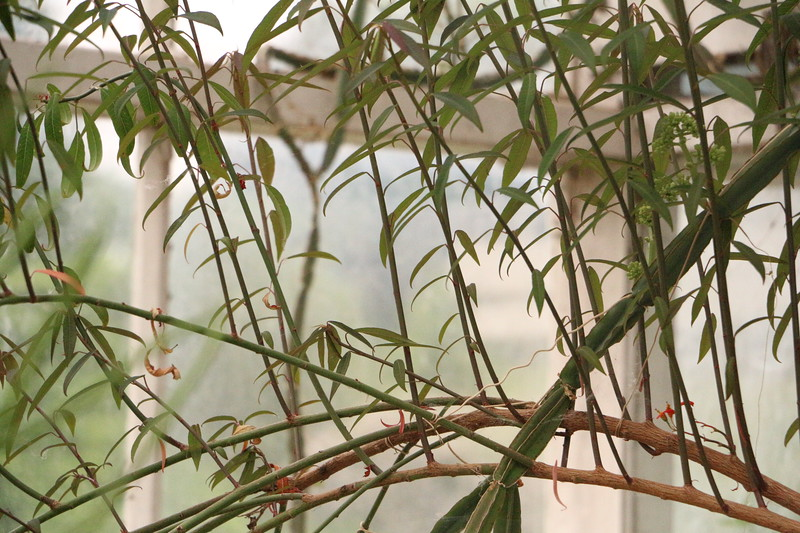martine O  Plantentuin 5