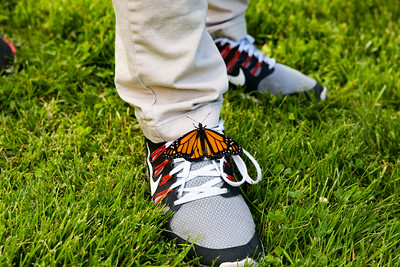 Monarch butterfly released at the Butterfly Ceremony