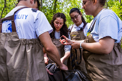 Tamar HahamMcGowan and Vicky Liu setting up an eel trap.