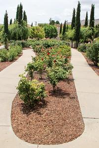 El Paso Municipal Rose Garden