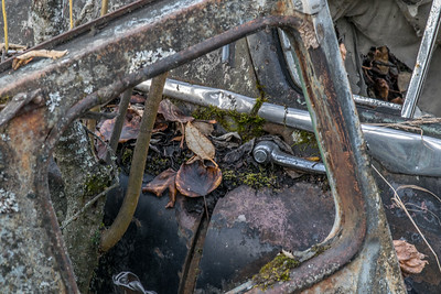 Car 3 with decay leaves