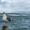 Bird 2-Complimentary