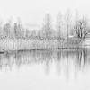 Reeds by Lake