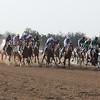 Arabian 6th race
